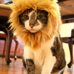 La crinière de lion pour chat