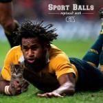Des chats à la place de ballons de sports