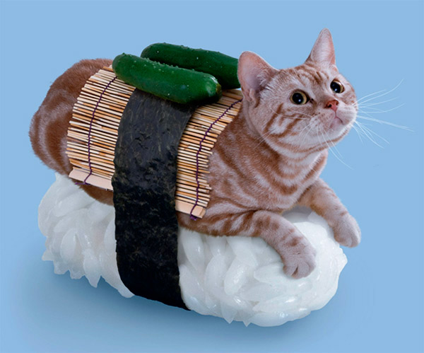 chat-sushi-2