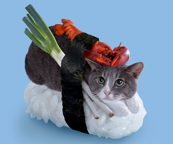 chat-sushi