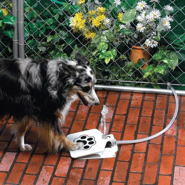 fontaine-eau-chien