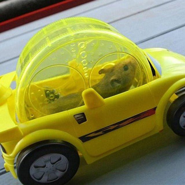 news geek la voiture de course pour hamster