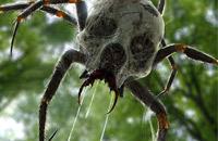 Je me suis fais mordre par une araignée