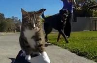 Ce chat fait du skate et des tricks