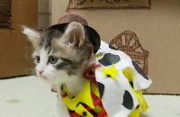Toy Story en version chatons