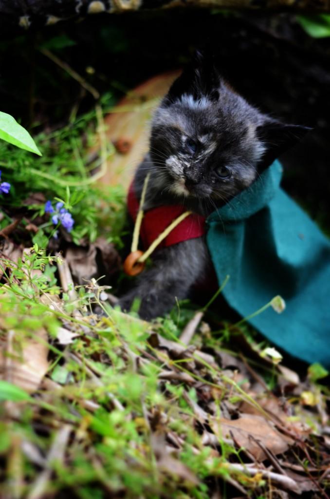chat seigneur des anneaux