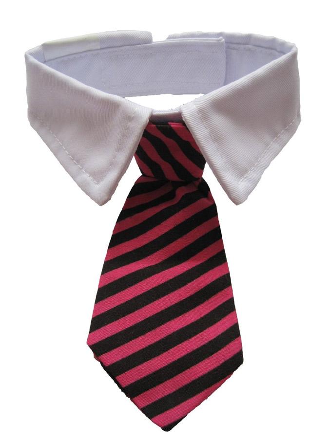 cravate-chat-2
