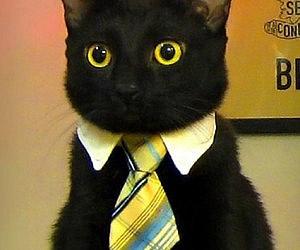 cravate-chat
