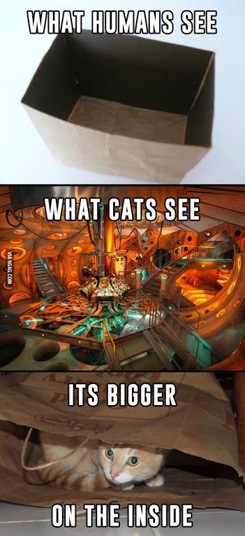 A quoi ressemble un carton pour un chat ?
