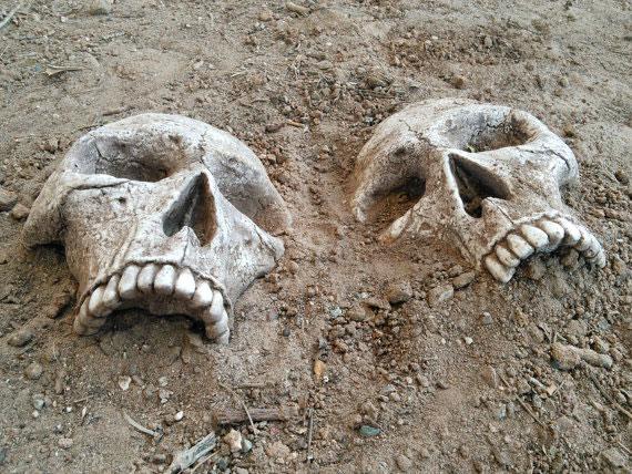 Crâne de jardin réaliste