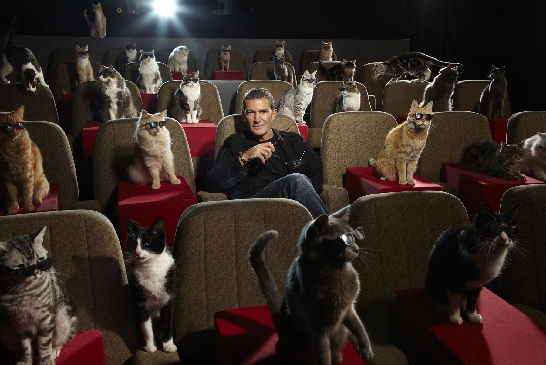 Cinéma pour les amoureux des chats