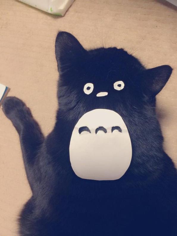 Transformer son chat en Totoro