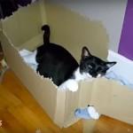 Un chat met 3 mois pour détruire son carton