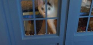 Maison à chat Tardis