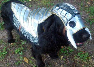 Armure pour chien