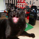 Dingo : Mon petit chat